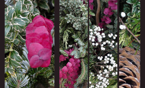 11/11: News from the Sidewalk Planter: holiday colors edition (photo credit: J.A. Ginsburg / CC BY-NC-ND / @TrackerNews)