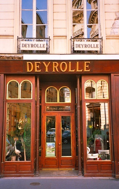 the deyrolle. paris. taxidermy. i will and need to go visit.