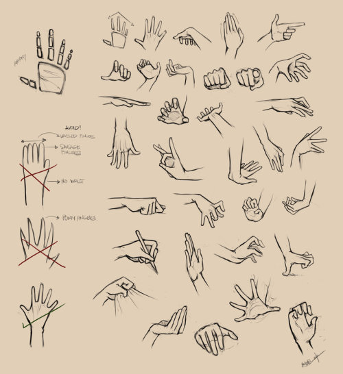 artutorials:  Hands Reference 1 by ninjatic on Deviantart. Click through for part 2 and one on feet as well!