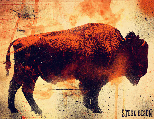 Testing Textures with a Bison. -SAM