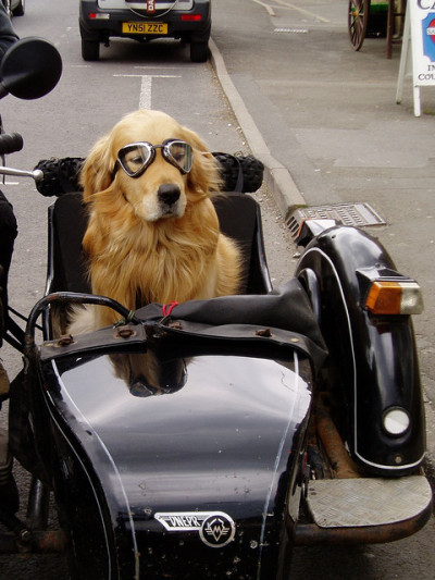 dogrules:  Dog on Wheels (By James)