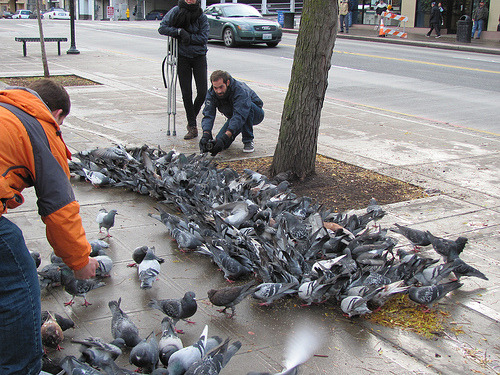 Feeding the Pigeons (by javacolleen)