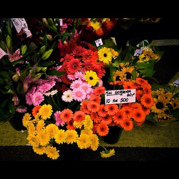 Repost higher quality #flower  (Taken with instagram)
