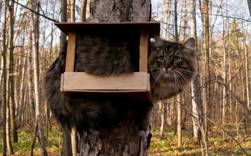 catasters:   Where have all the birds gone?   The best bird feeder I ever seen!