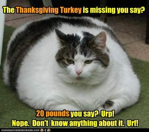 Happy Thanksgiving! (to my followers in the US)
