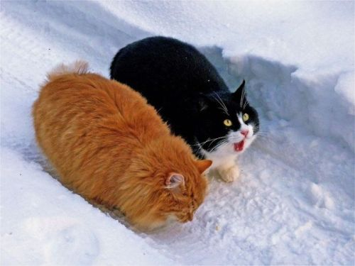 "cybergata:  ""OMG, my tootsies are freezing!"""