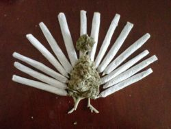 sleepingindreams:   happy thanksgiving ^_^  Hahahaaha  Snap, it makes me wanna try 0.o Just for the holidays though.
