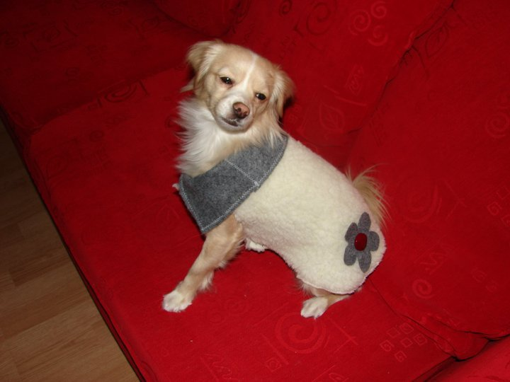 This is one of Zoe's winter coats, it's made with the same heavy fleece I used for Dino head. The collar & flower are made of scrap felt and the button was a Goodwill find.  model=Zoe photo=nap
