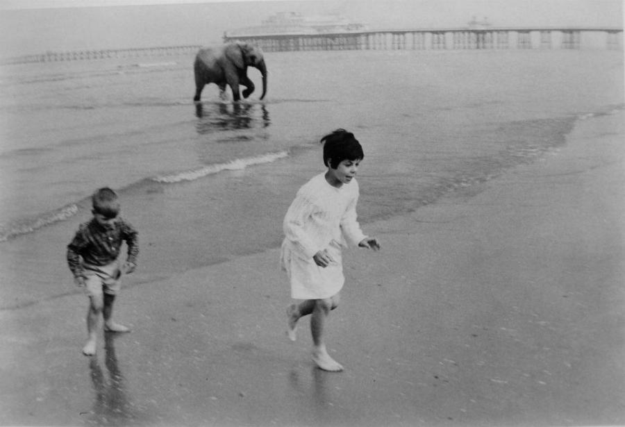 baby elephant child sea photo Henri Cartier-Bresson