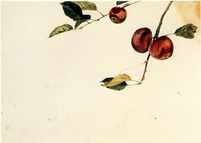 iamjapanese:    Andrew Wyeth Apples on a Bough, Study Before Picking   1942