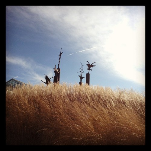 Kinnebrew piece & grasses. #sculpture #meijergardens #gr #fmgsp  (Taken with instagram)