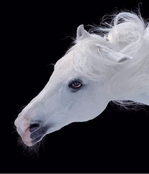 llbwwb:  For the Horse Lovers :) via:shangralafamily