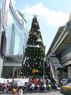 """Good Thai-dings for Christmas…"" Even in a Buddhist country the Christmas tree still manages to go up excessively early in one of the most traditional places: smack dab in front of Bangkok's newest shopping mall. In line with the Christmas season, the weather is getting colder and residents are even starting to sport hats and gloves. However, cold means a low of 76 degrees so I don't think we will have to worry about a white Christmas."