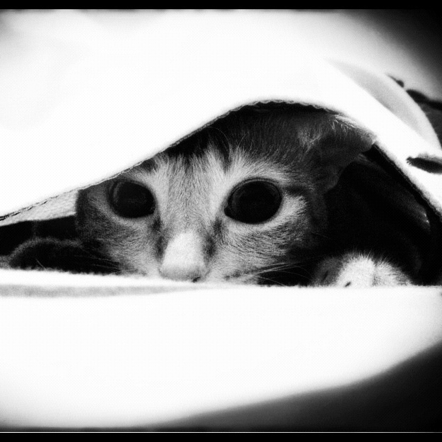 Rue loves observing the world from under the sheets. Cutest kitty EVARR!