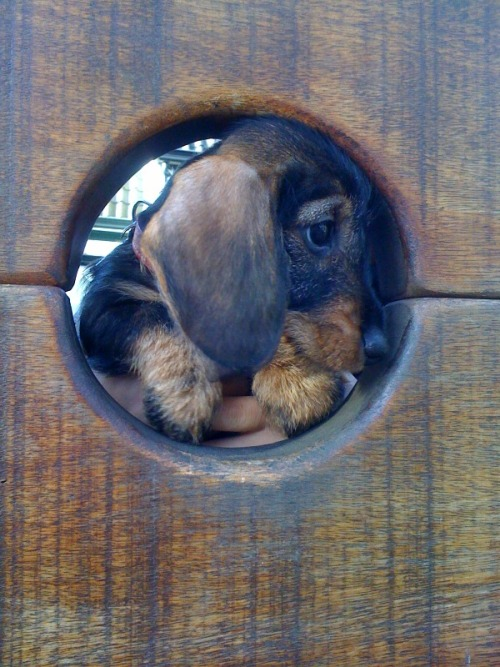 daisythedachshund:  Alright, alright, I'll confess…