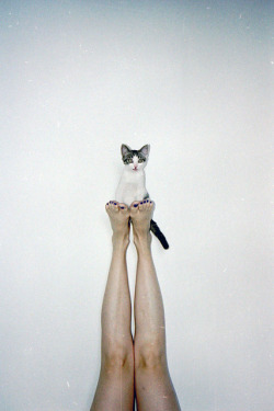 #cat #legs #girl #white