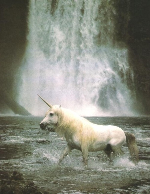 logfires:  unicorns are so real omg omg