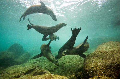 Seals in Galapagos, Ecuador by James R.D. Scott
