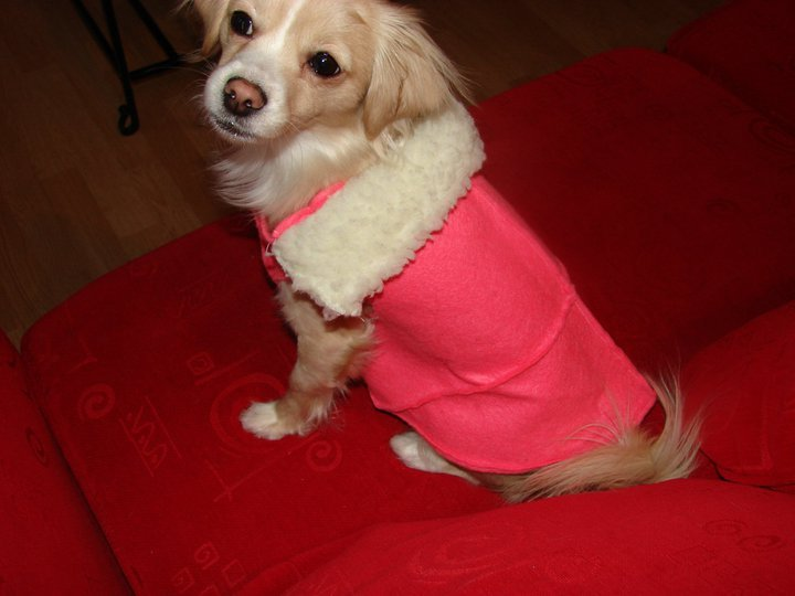 "And another winter coat.. this time pink :)  I used felt from those craft packs at the dollar store. stitched 4 pieces of felt together then cut out a basic pattern. I used the same scrap heavy fleece for the collar and added snaps to close. This coat can be reversible, one way looks nice and clean, the other a ""mountainey"" feel.  mountainey= rustic, woodsy, hunterish.. you know :p model=Zoe photo=nap"