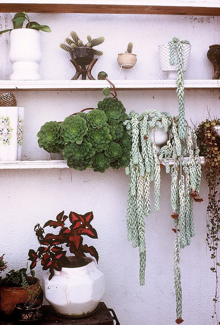 ohgodohno:  Patio Plants by The Real Estreya on Flickr.