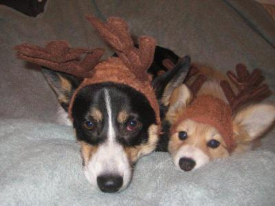 It's ALMOST December. Holiday spirit cuteness! via corgiaddict:  edearlofsandwich:  Ghibli and Ed Reindeers  Dawwww reindogs!