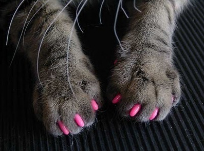 pricklylegs:  Oooh girl!  I got my nails did!