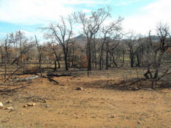NewsOK ran a story this Sunday about an update on a raging wildfire that burned more than 27,000 acres of the Wichita Mountains Wildlife Refuge in September. The fire was fully contained a month later, but reporter Ron Jackson looks at the lasting effects of the blaze and how it could impact wildlife at the site.  The scenic refuge is again open to visitors, and Mother Nature has started the healing process. Greenery can already be seen sprouting from the charred and blackened carpet that covers the refuge terrain, but normalcy is nowhere in sight.