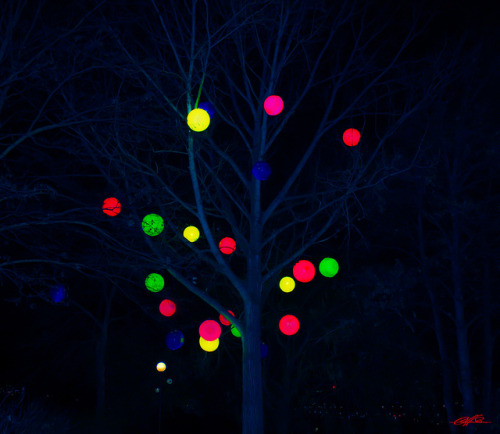 Decorated Tree of Coloured Globes (Djurgården #1 Nighttime) on Flickr.A nightime shot