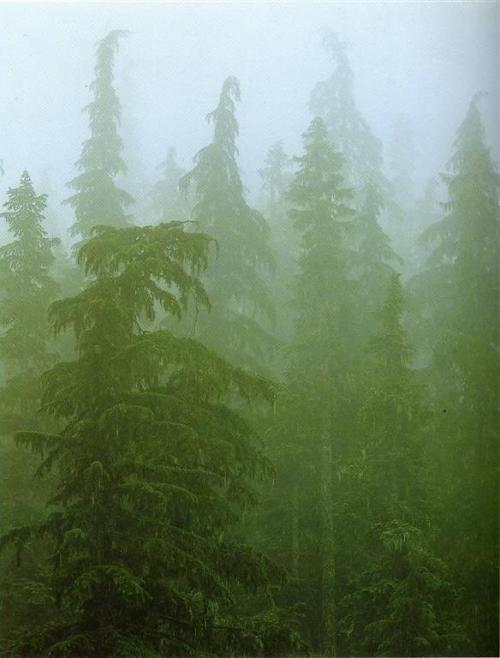 nevadamoonrise:  fernsandmoss David Muench