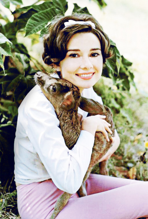 Audrey Hepburn with her pet fawn Ip, 1958