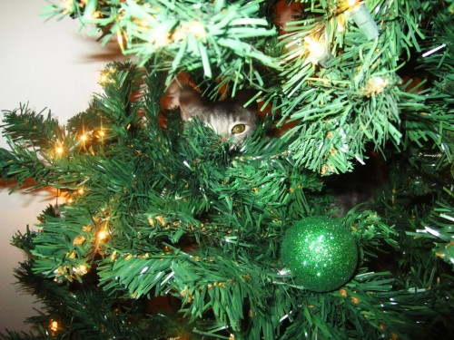 getoutoftherecat:  get out of there cat. you are not an ornament. i can not hang you from a branch. you will just knock the tree over.