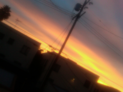 A serendipitous encounter with orange sky and a telephone pole. LA sunrise, Fairfax District