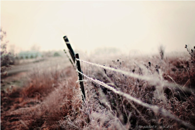 Frosty Fence {Explored} by amberaikenphotography on Flickr.