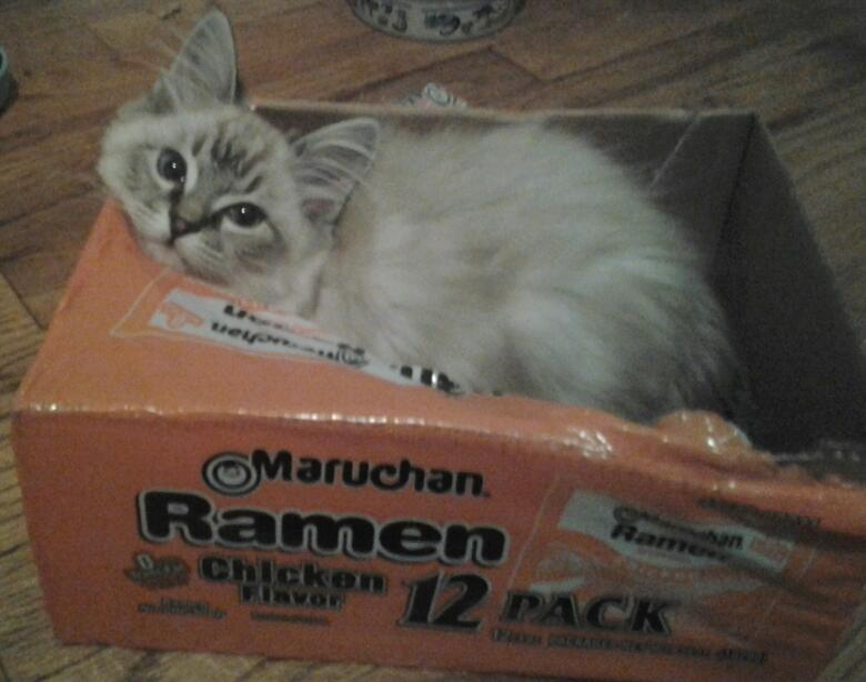 Kitty loves Ramen © 2011 M. Dajos