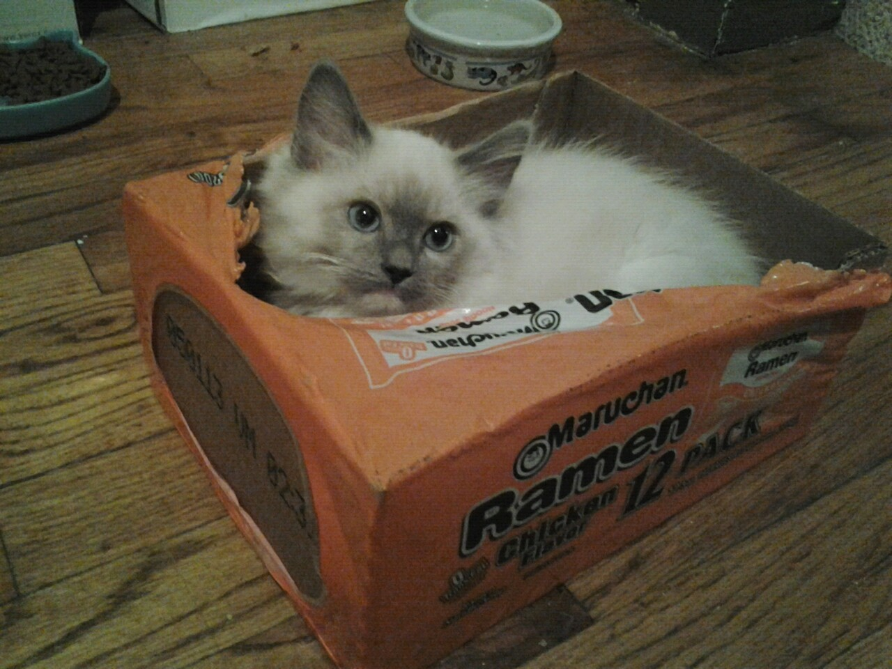 This Kitty Loves Ramen Too © 2011 M. Dajos