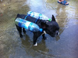 Chaleco Salvavidas Ecológico hecho con Botellas PET - Dog life jacket made with plastic bottles !!