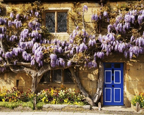 dianainmyheart:  Wisteria Covered Cottage, The Cotswolds, England