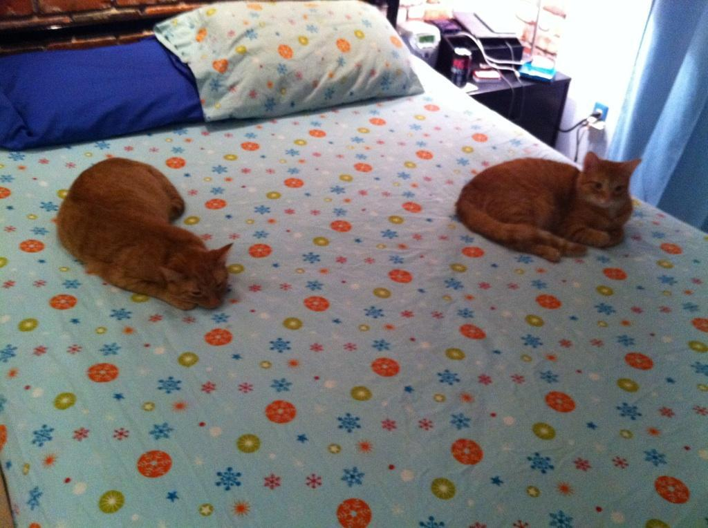 The boys approve of the new bedsheets.
