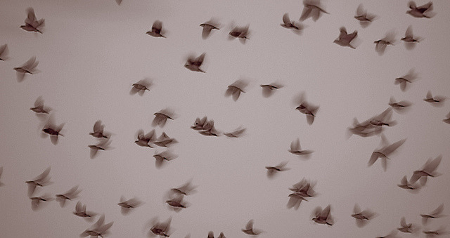 Flyin'… by Cliché for u on Flickr.