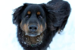 My dog, Al, in the snow! submitted by: http://hifihighfive.tumblr.com/ :) xx