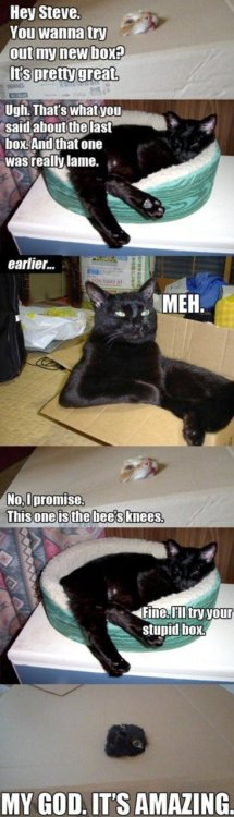 Cats love boxes. Period.