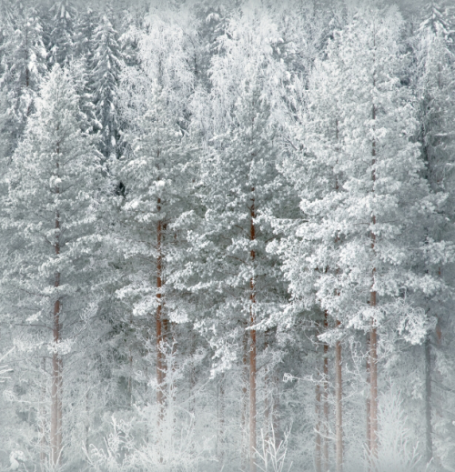 neiture:  Winter Time, Finland | image by Olli Kekäläinen