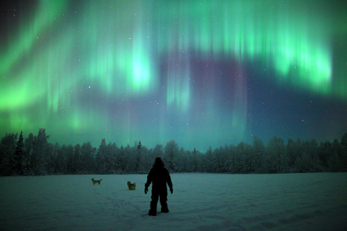 ouruniversevisualized:  Aurora seen in Muonio, Lapland, Finland on November 28, 2011. credit: Antti Pietikäinen