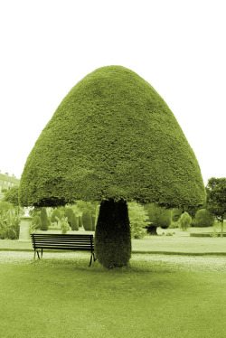 plasticdreams:  Topiary in Drummond Castle Gardens, Crieff, UK…