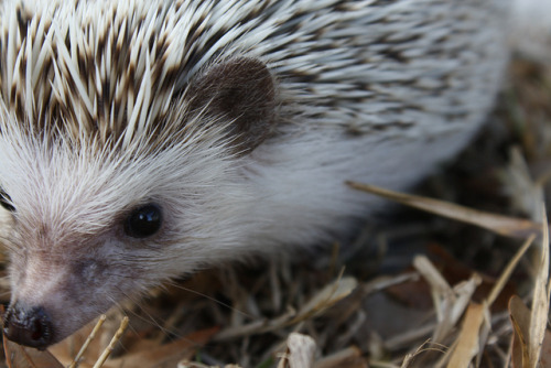 hedgehog-s:  untitled by lightfactory on Flickr.