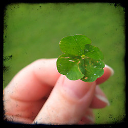 single clover closeup ttv  by isewcute on Flickr.