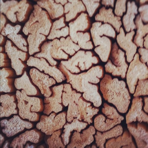 Brain grain #wood #bamboo #pattern #texture #organic #texture (Taken with instagram)