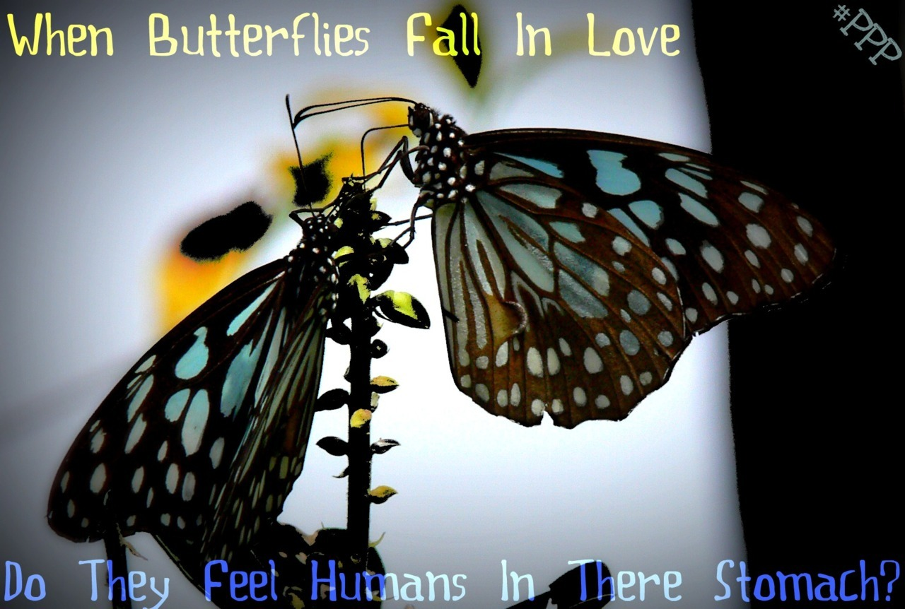 shadia-kemeria:  ‎- when butterflies fall in love do they feel humans in their stomach? FOLLOW PERI PERI PRODUCTIONS