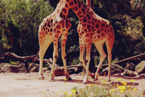 toflyawayy:  spotted waltz by rosuuuu ✂ on Flickr.