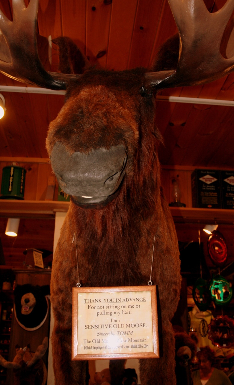 The Moose at Zebs General Store, North Conway, NH, USA. 2008